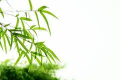 Bambusów liście z wodnymi kroplami Obrazy Royalty Free