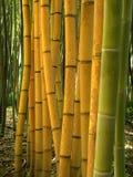 Bambus 05 Obraz Royalty Free