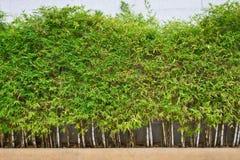 bambus Zdjęcia Stock