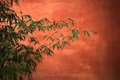 Bambus Stockfoto