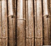 bambus Zdjęcia Royalty Free