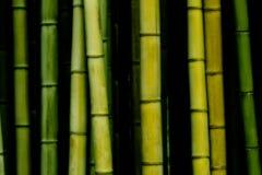 Bambus Fotografia Stock