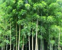 Bambus Fotografia Royalty Free