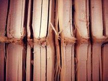 Bambus Zdjęcie Royalty Free