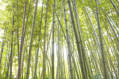 Bambus Stockfotos