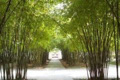 Bambus Lizenzfreie Stockbilder