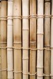 Bambus lizenzfreies stockbild
