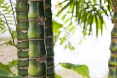 Bambus Stockbilder