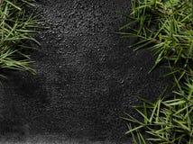 Bambus auf einem nassen Schiefer-Hintergrund Stockfoto