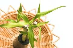 Bambus auf einem natürlichen Tellersegment Stockbilder