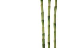 Bambus auf Weiß Lizenzfreies Stockfoto