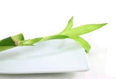 Bambus auf weißer Platte Lizenzfreies Stockfoto