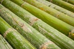 Bambus, Bambushintergrund Stockbild