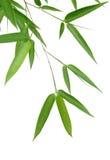Bambus-Blätter Stockbild