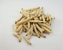 Bambus-Caterpillar- - Omphisa-fuscidentalis stockbild