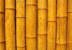 bambus ściana Fotografia Royalty Free