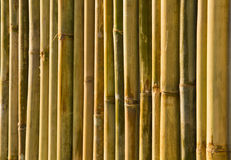 bambus ściana Obraz Stock