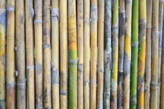 Bambus ściana Zdjęcie Royalty Free