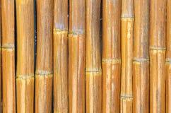 Bambus ściana zdjęcia stock