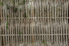Bambus ściana, bambus przy Kanchanaburi Thailand Zdjęcia Stock