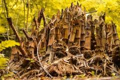 Bambus de Cutted fotografia de stock royalty free