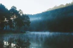 Bambus, der auf Fluss mit Sonnenlicht flößt Stockfotografie
