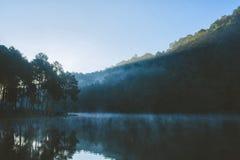 Bambus, der auf Fluss mit Sonnenlicht flößt Stockfotos