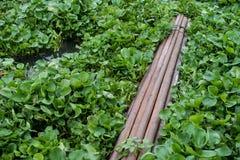 Bambus, der auf Fluss schwimmt Stockbild