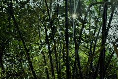Bambus-Dschungel und Sonnenlicht lizenzfreie stockbilder