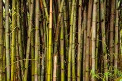 Bambus e bambus foto de stock