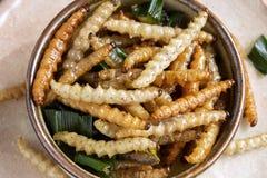 Bambus- essbare Wurminsekten knusperig oder Bambus-Caterpillar in einer keramischen Schüssel Das Konzept von Proteinnahrungsquell lizenzfreie stockfotos