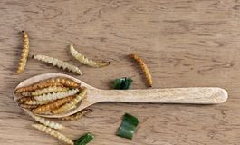 Bambus- essbare Wurminsekten knusperig oder Bambus-Caterpillar im hölzernen Löffel auf einer hölzernen Tabelle Das Konzept von Pr stockfotografie