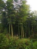 Bambus forrest obraz royalty free