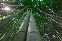 Bambus forrest Obraz Stock