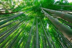 Bambus forrest Lizenzfreies Stockbild