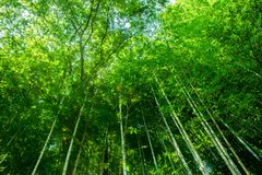 Bambus forrest Lizenzfreies Stockfoto