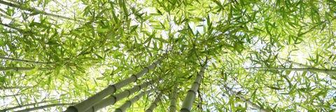 Bambus forrest Zdjęcia Stock