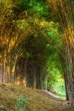 Bambus forrest Stockfotografie