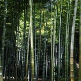 Bambus forrest Obrazy Stock