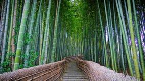 Bambus forrest Lizenzfreie Stockfotos