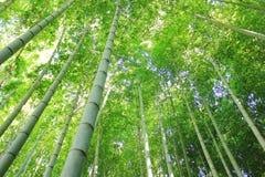 Bambus forrest Zdjęcia Royalty Free