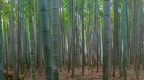Bambus forrest stockbilder