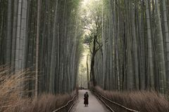 Bambus-Forset verlängerte Lizenzfreies Stockbild