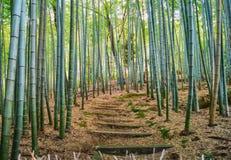 Bambus-Grove in Tempel Adashino Nenbutsu-ji Stockbilder