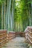 Bambus-Grove in Tempel Adashino Nenbutsu-ji Stockfotos