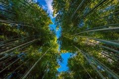 Bambus-Grove in Tempel Adashino Nenbutsu-ji, Tokyo Lizenzfreie Stockfotos