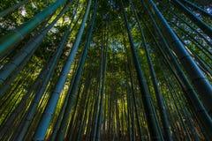 Bambus-Grove in Tempel Adashino Nenbutsu-ji, Tokyo Lizenzfreies Stockfoto