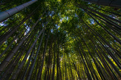Bambus-Grove in Tempel Adashino Nenbutsu-ji, Tokyo Lizenzfreies Stockbild