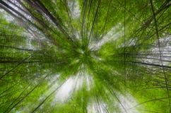 Bambus i światło słoneczne Obraz Stock
