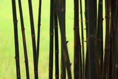 Bambus im grünen hellen Hintergrund des Schattens stockfotografie